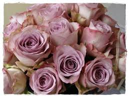 110 best roses 95 bi colored shades of roses images on