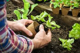 plants that naturally repel pests cure all pest control