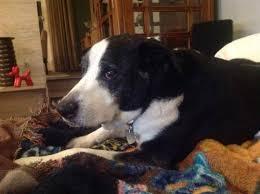 dog euthanasia home pet euthanasia of southern california home
