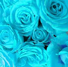 Teal Roses 82 Best Roses Images On Pinterest Pretty Flowers Beautiful