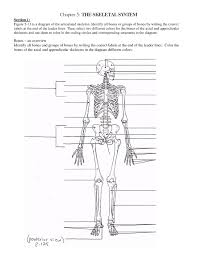 human anatomy word search images human anatomy learning