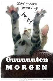 s e katzen spr che 93 best katzen images on sayings cats and