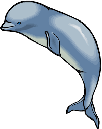 beluga whale clipart free download clip art free clip art on