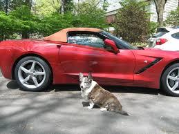 corvette forum topic the many pets of corvette forum corvetteforum