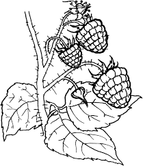 fruit and berries coloring pages 9 fruit and berries kids
