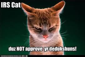 Poke Meme - cat poke meme poke best of the funny meme