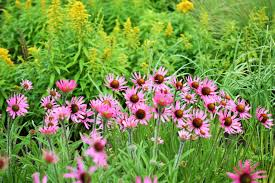 native prairie plants pics from the pollinator garden knoxville botanical garden and