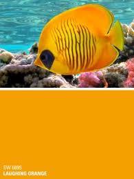 sherwin williams orange paint color u2013 daring sw 6879 simmering