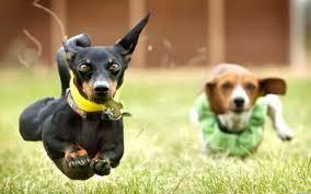 dog wallpapers desktop pitbull pics dogs wallpaper