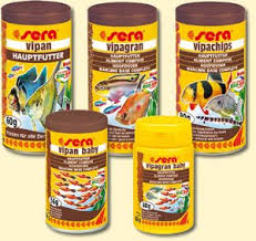 pesci alimentazione pesci tropicali d acqua dolce e la loro alimentazione microcosmo