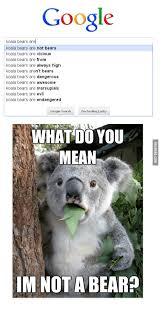 High Koala Meme - 25 best memes about high koala high koala memes