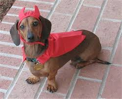 Halloween Costumes Dachshunds 75 Celebrate Halloween Images Weenie Dogs