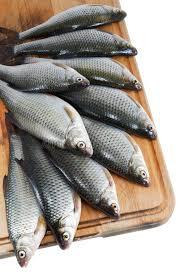 cuisiner le gardon poissons de fleuve gardon sur le panneau de cuisine au dessus du
