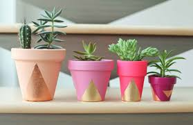 exceptional three decorative pot plants on a wooden surface