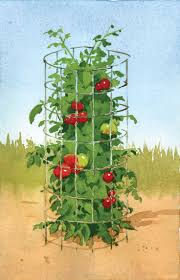 tomato cages home design inspiration home decoration collection