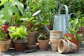 50 ideas to build your first vegetable garden a green hand