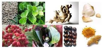 hot 3 ramuan tradisional untuk memperbesar alat vital pria cara