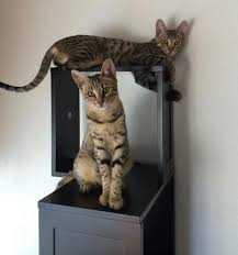 modern cat furniture sebastian modern cat tree review kitty loaf