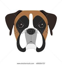 2 types of boxer dogs boxer dog stock images royalty free images u0026 vectors shutterstock