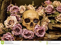 halloween background family still life human skull with roses background stock photo image