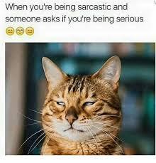 Sarcastic Cat Meme - 25 best memes about grumpy cat grumpy cat memes