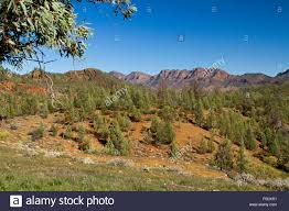 rocky mountain native plants rugged landscape of flinders ranges with native cypress pine trees