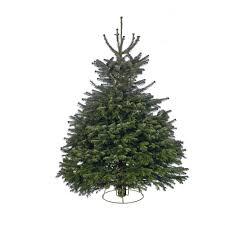 cut nordman fir real tree 4 5ft at homebase co uk