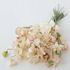 sweet peas flowers floret flower farm s favorite sweet peas floret shop