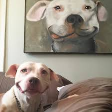 Dog Smiling Meme - pit bull of the week smiling brinks