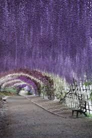 best 25 japan flower garden ideas on pinterest