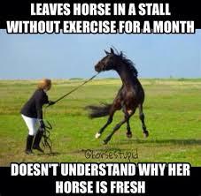 Horse Riding Meme - th id oip 74k1dygvfwjuoavcxbeq5whahr