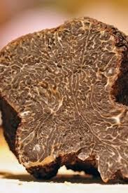 cuisiner la truffe cuisiner la truffe ohhkitchen com
