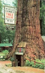 famous tree houses world famous tree house earlier known as quadruped tree and
