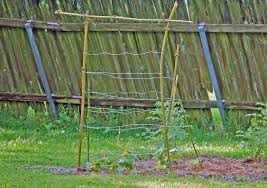 how to trellis cucumbers part 42 make a garden trellis system