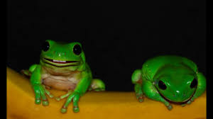 frog cartoon videos articles pictures funny or die