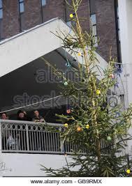 britain s worst tree stock photo 110239600 alamy