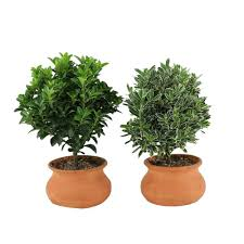 House Plants by Low High Low House Plants Indoor Plants The Home Depot