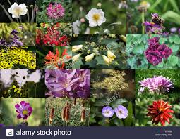 blooming plants floral collage of various photos of colorful blooming plants and