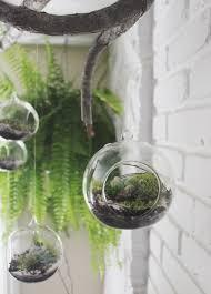 Succulent Kits by Decor Hanging Terrarium Succulent Terrarium Hanging Glass