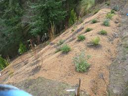 landscaping ideas on a steep hill articlespagemachinecom