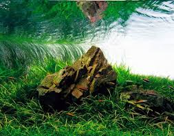 Nature Aquascape 42 Best Nature Aquascaping Style Tag Images On Pinterest