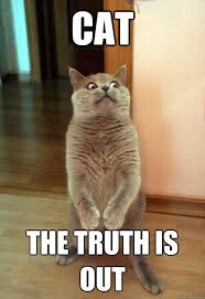 Truth Meme - cat the truth is out cat meme cat planet cat planet