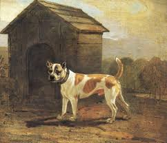 american pit bull terrier history history astcv web page