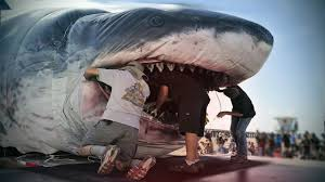 biggest megalodon shark megalodon shark caught on tape largest great white shark secret