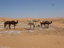 algeria top things to see ze wandering frogs