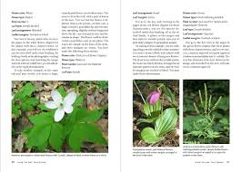 218 best native plants images wildflowers of the pacific northwest a timber press field guide