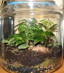 how to make a plant terrarium dengarden