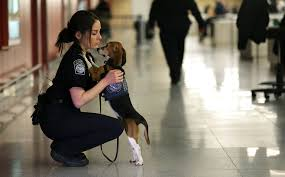 us customs just another day at the office aww