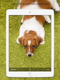 cute puppies 2 wallpapers puppy wallpapers u2013 cute puppy pictures u0026 images on the app store