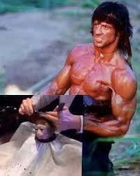 Rambo Meme - rambo monkey haircut know your meme